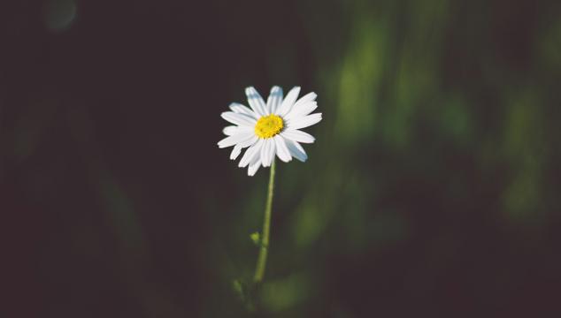 English Grammar: Articles for One of Something | English Teacher Melanie