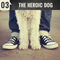 The Heroic Dog | Episode 3 of the English Teacher Melanie Podcast